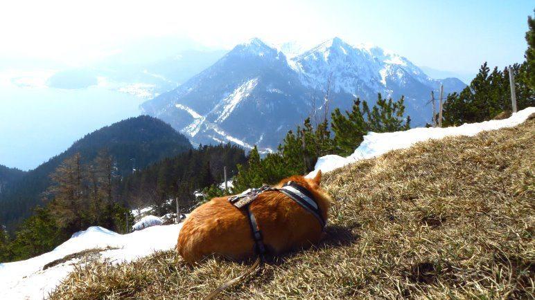 Relaxen am Berg, sich die Sonne auf den Pelz scheinen lassen und Blick auf Walchensee und Herzogstand. Schon ganz gut