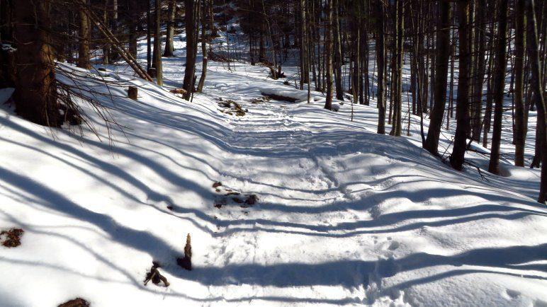 Schattenspiele auf dem verschneiten Waldweg