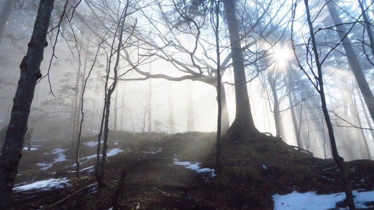 Sonnenstrahlen im Wald. Jetzt sind wir fast aus dem Nebel heraus