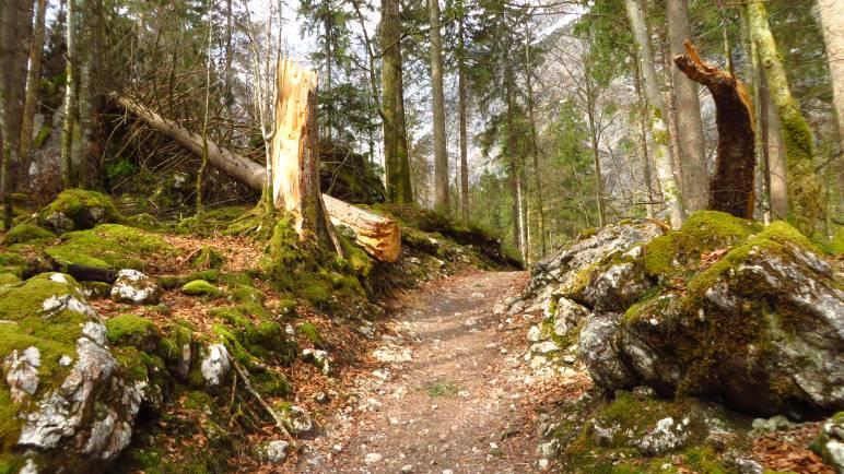 Der wilde Wald zwischen Königssee und Watzmann