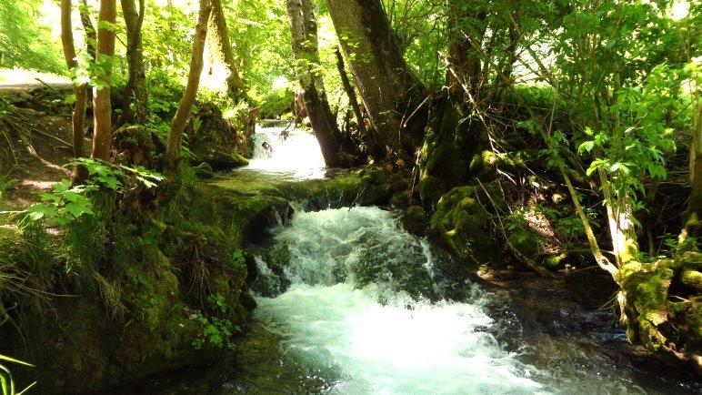 Der Brühlbach, manchmal fließt er träge dahin, manchmal sieht er wie ein Wildbach aus