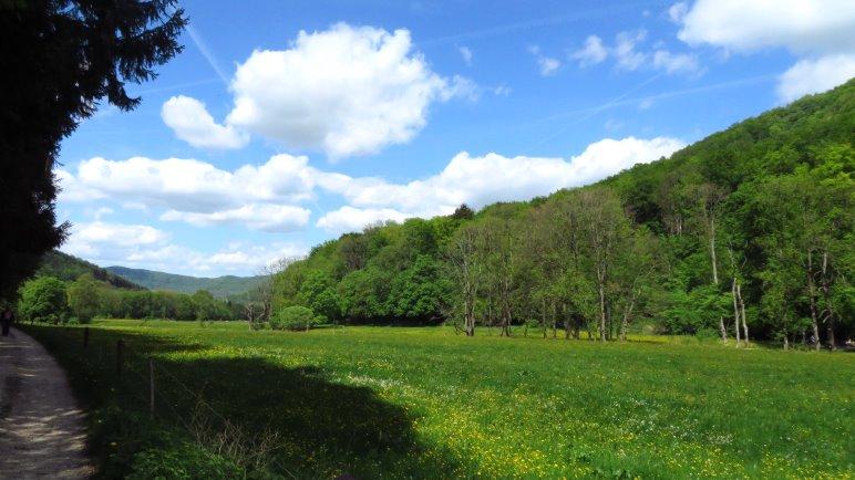 Auf dem Rückweg durch das Brühlbachtal
