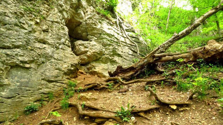 Ein Höhleneingang, nur wenige Meter oberhalb des Wegs. Nichts wie hin