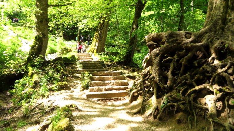 Am dichten Wurzelgeflecht beginnt die Treppe hinauf zum Wasserfall