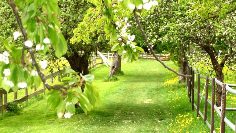 Ein Wiesenweg mit Obstbäumen am Hof Diepoldsburg
