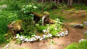 Eine kleine Welt im Wald
