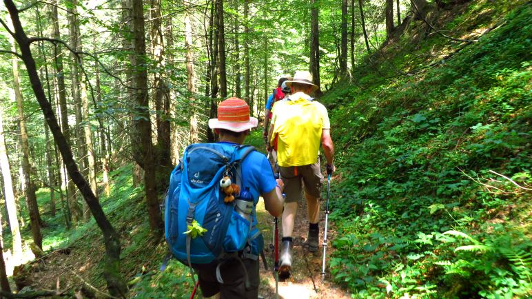 Waldwanderung im Lattengebirge auf schmalen Pfaden