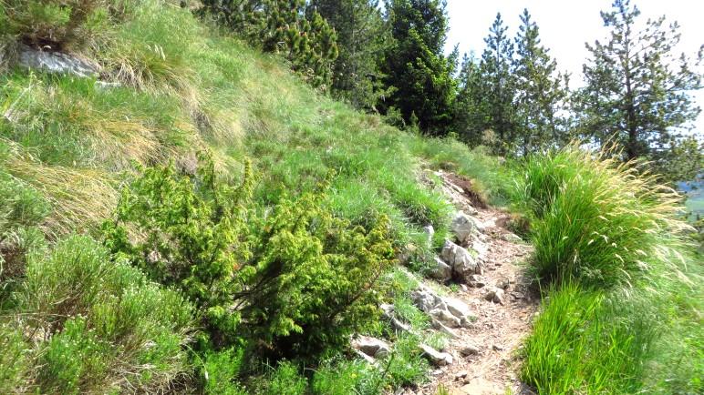Ein schöner Bergsteig führt auf den Monte Altissimo. Hier noch im bewaldeten Gebiet