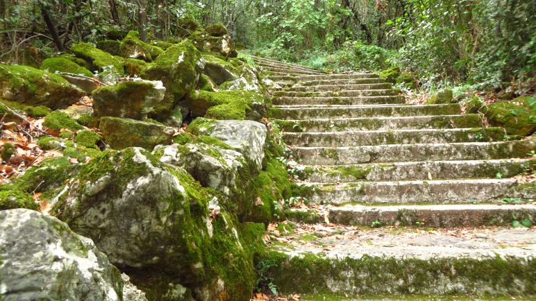 Schön bemooste Treppen