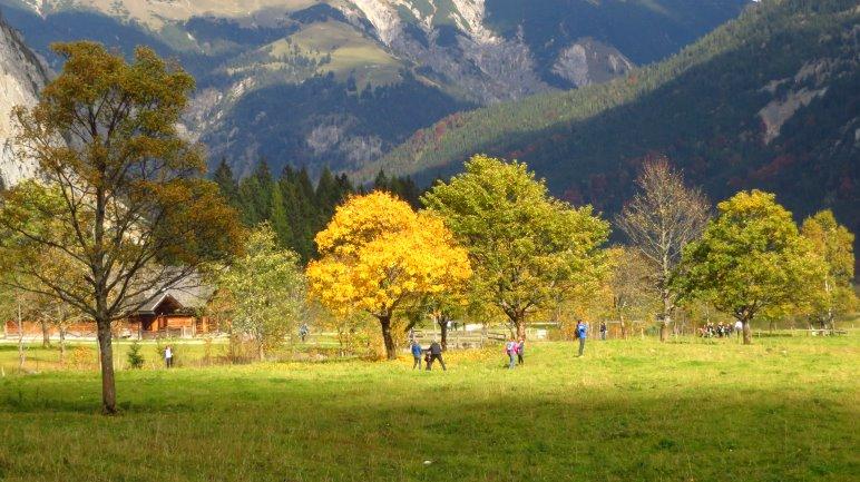 Herbstlich gefärbte Bäume an den Engalmen