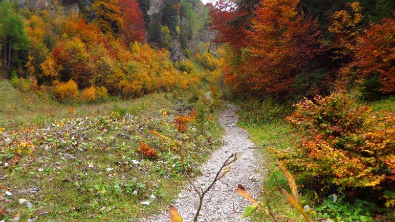 Der Wanderweg zur Binsalm zweigt gleich hinter dem Alpengasthof Eng nach links ab
