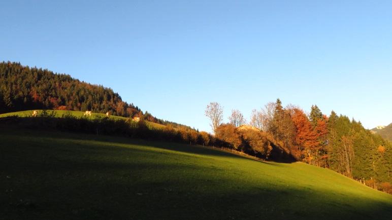 Eine Wiese in der Abendsonne bei Mitterleiten
