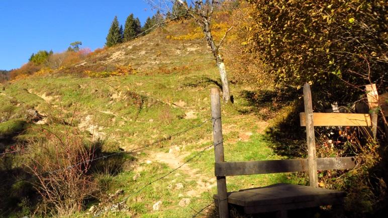 Kurz hinter Mitterleiten führt der Weg über eine Almwiese Richtung Wald