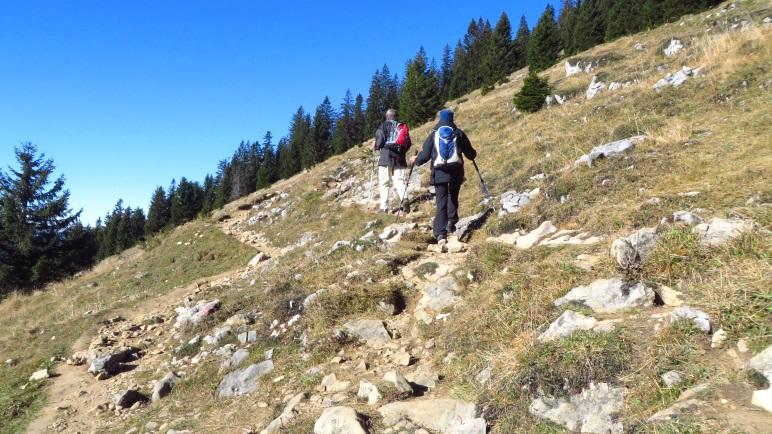 In Serpentinen  führt der Weg über Almwiesen hinauf zum Spitzstein