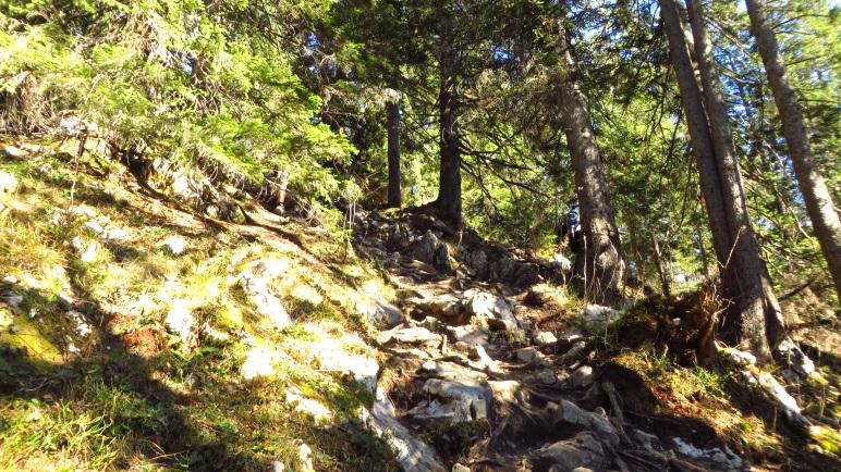 """Im Wald wird der Weg deutlich steiniger und führt """"Zach"""" bergauf"""