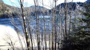 Blick auf den Sylvensteinspeicher zwischen den Bäumen hindurch