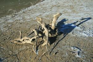 Eine Wurzel auf dem Seegrund