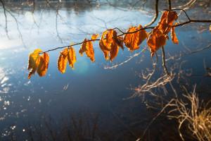 Schön herbstliche Blätter im Sonnenlicht