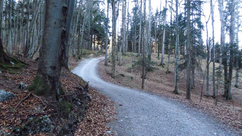 Auf dem Fosrtweg geht es unspektakulär hinauf zu den Daffnerwaldalmen