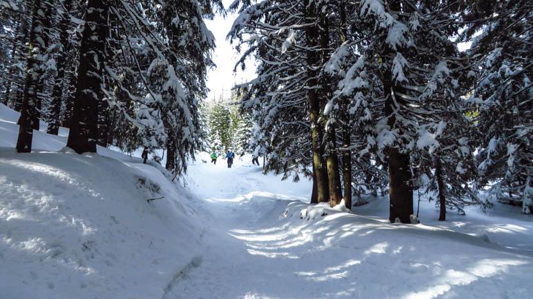 Der Weg durch den verschneiten Winterwald