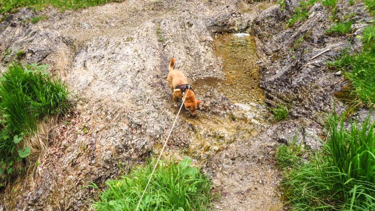 An mehreren Bachquerungen, diese hier führt über Felsplatten, können Hunde ordentlich trinken