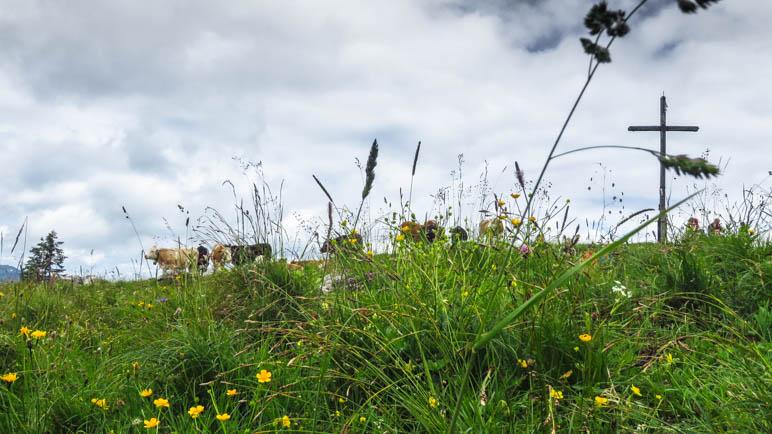 Gipfelkreuz, glückliche Kühe und dahinter ein Bergpanorama - auf der Hochalm