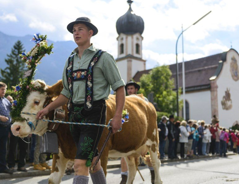 Bauer mit geschmückter Kuh beim Almabtrieb in Krün - Foto: www.zugspitz-region.de / Wolfgang Ehn