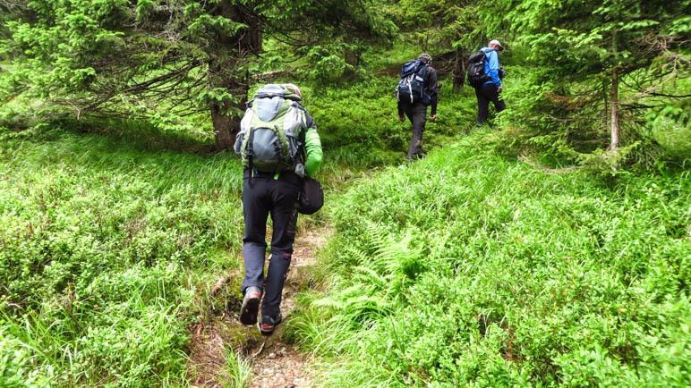 Aufstieg im Wald, der überwiegend steil verläuft
