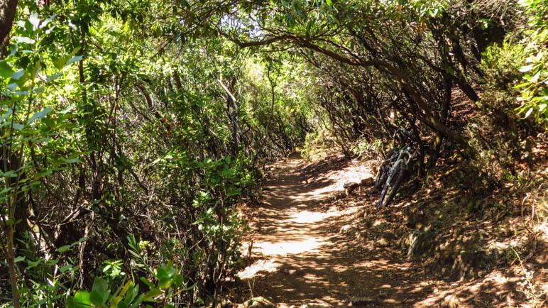 Zunächst führt der Weg durch einen Wald
