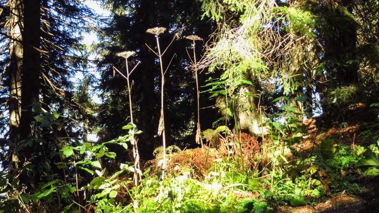 Im Wald hinauf zum Seekarkreuz