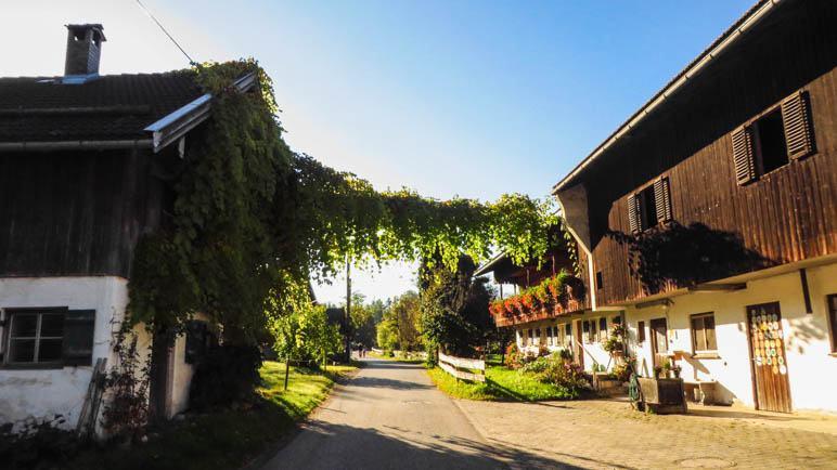 Unter einem grünen Tor hindurch zum Grasleitensteig