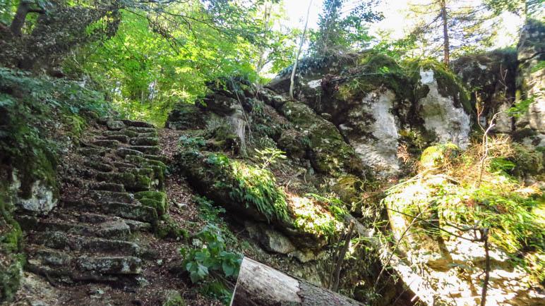 Treppenstufen, die inzwischen mit der Natur verwachsen sind