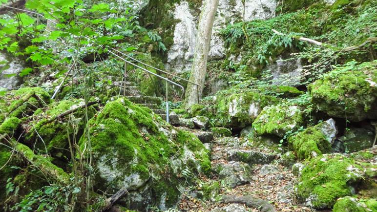 Wie im Märchenwald, durch den ein verwunschener Weg führt