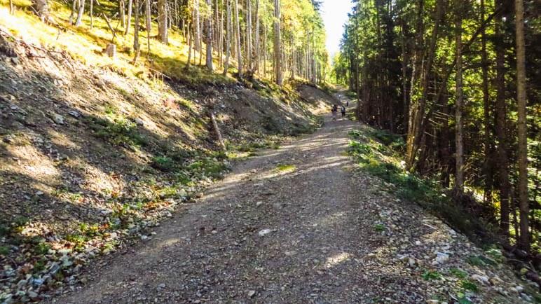 Sieht übel aus: Die Forstautobahn, die mal der Grasleitensteig war