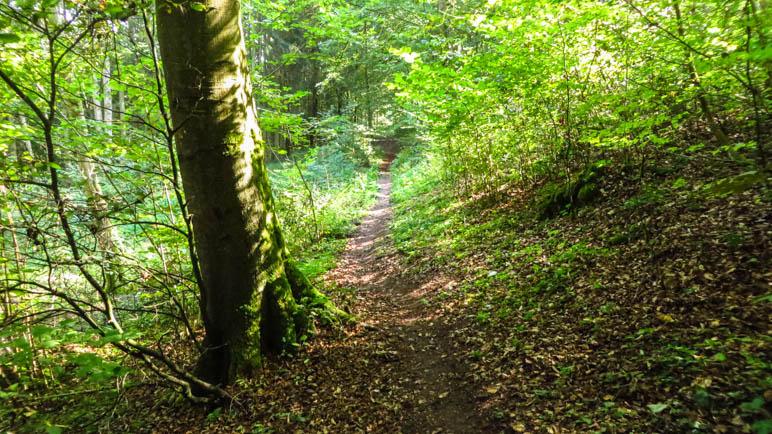 Geradeaus und leicht ansteigend fürht der Weg durch den Wald