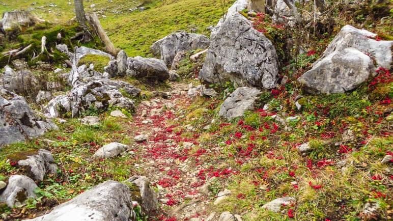 Ein Weg voller roter Beeren