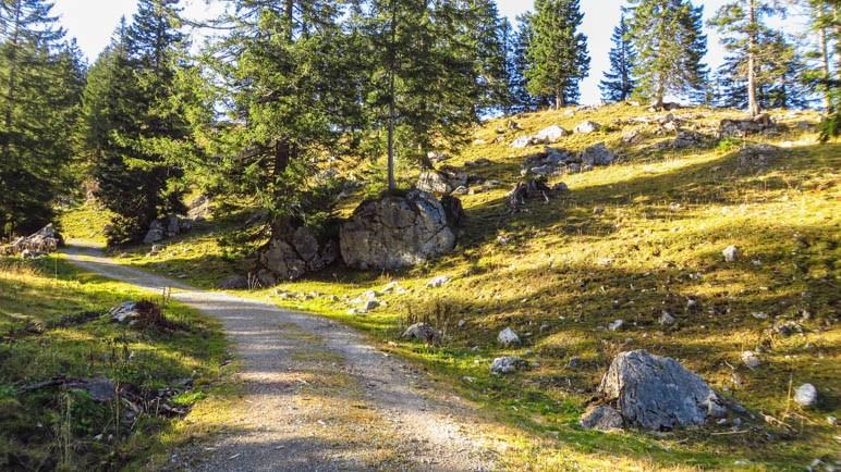 Auf dem Rückweg zum Taubensteinhaus