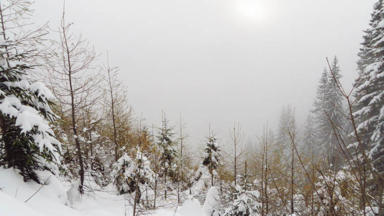Im winterlichen Wald