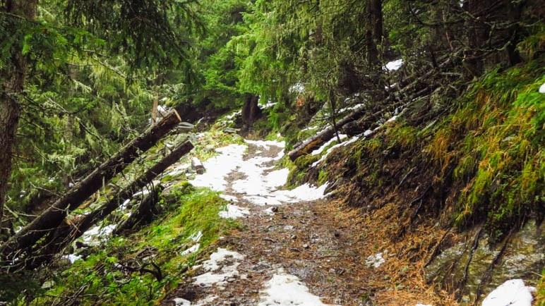 Der erste Schnee beim Aufstieg zum Berggasthaus Boscheben