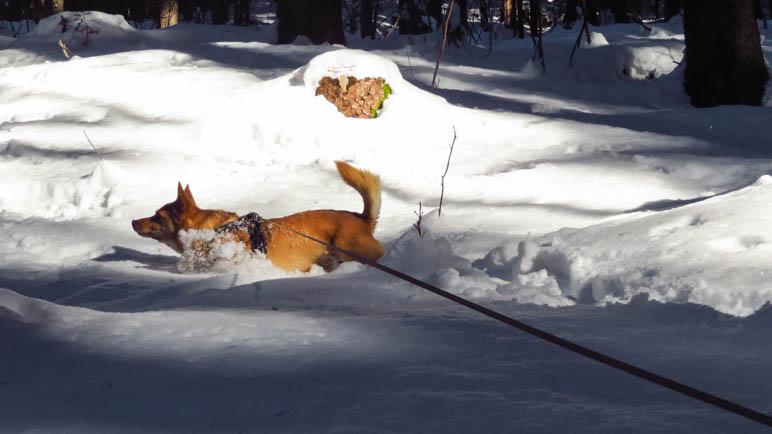 Hundespaß im Schnee
