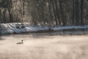 Am dampfenden Schwanenweiher