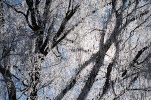 Ein vereister Baum