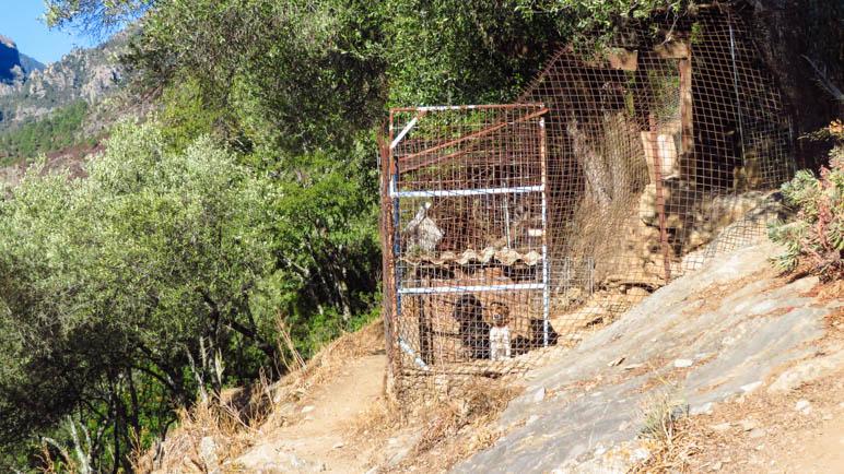 Kein schöner Anblick: Die Hunde hinter dem rostigen Zaun