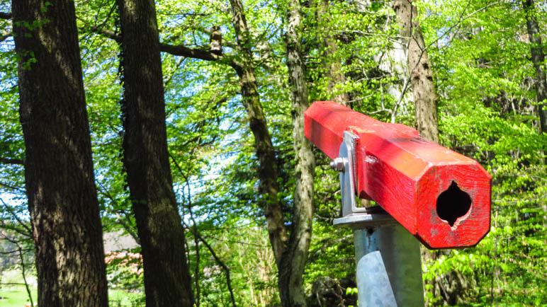 Was sieht man wohl durch dieses Fernrohr im Wald?