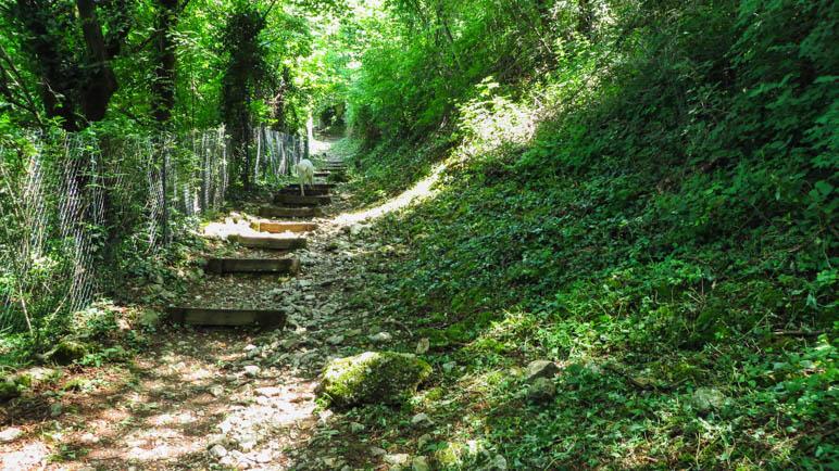 Durch den schattenspendenen Wald führt der Weg weiter bergauf