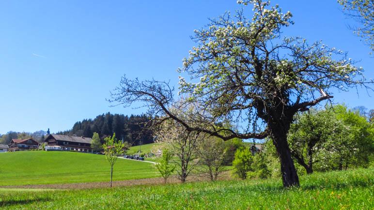Wieder geht es über die Wiesen. Im Hintergrund der Gasthof Weingarten