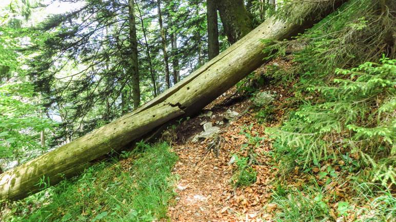 Eine von mehreren Stellen, an denen man über Baumstämme steigen muss