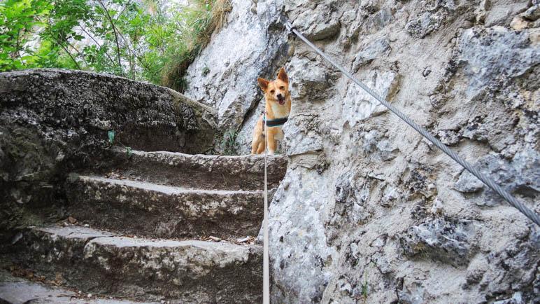 Erster! Für Hunde, die gerne Stufen laufen, ist der Wanderweg hervorragend geeignet
