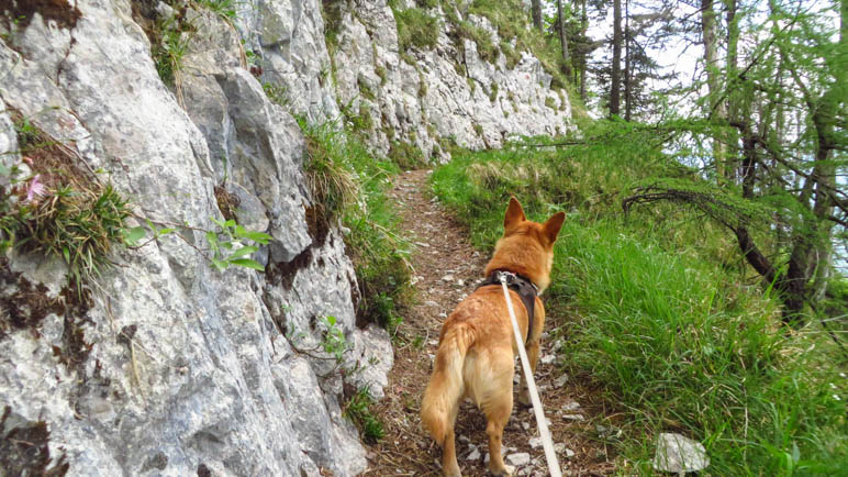 Der Weg führt an einer Felswand entlang