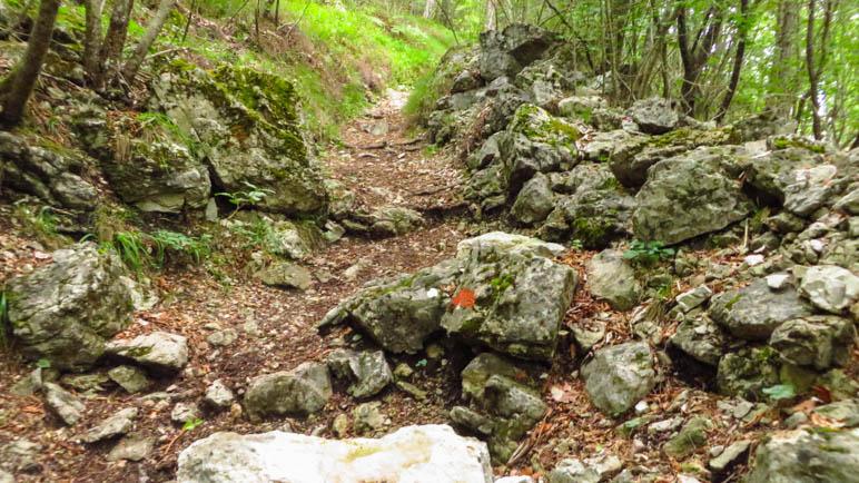 Steiler Aufstieg durch den Wald, auch wenn es hier nicht so aussieht